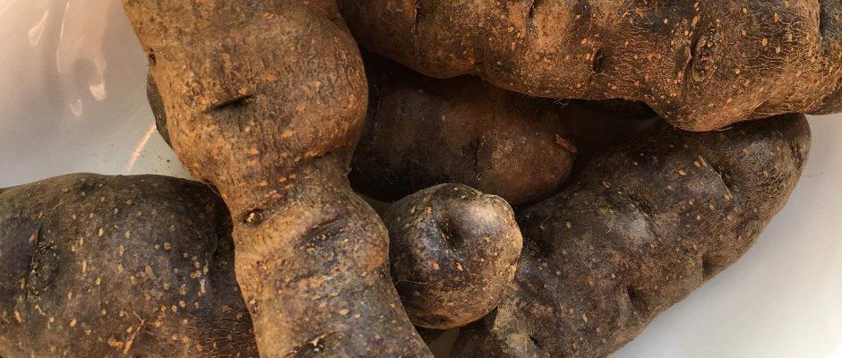ljubičasti plavi krompir
